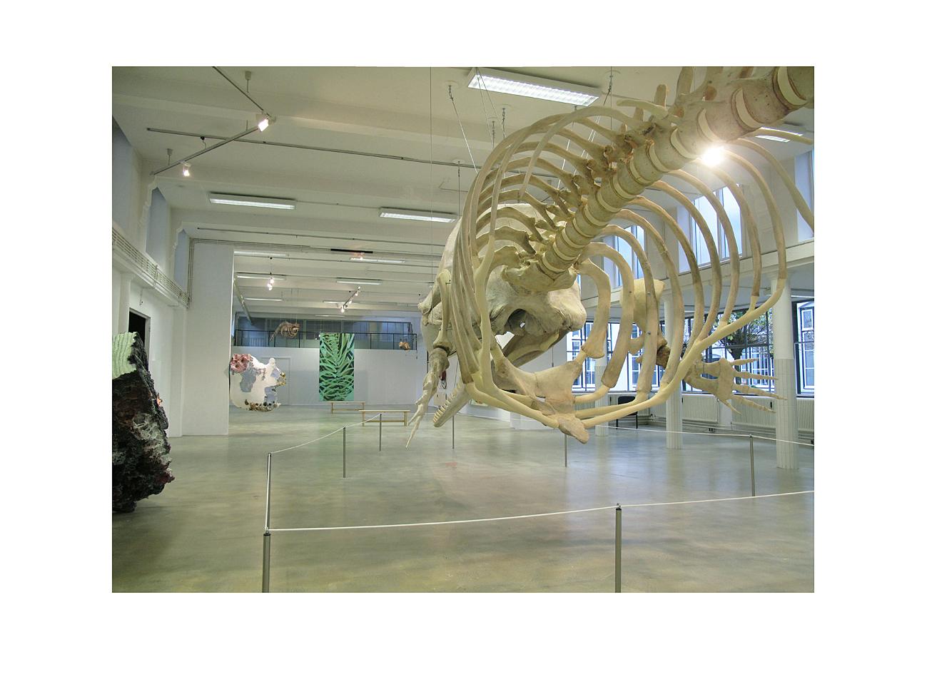 Natuurmuseum 1