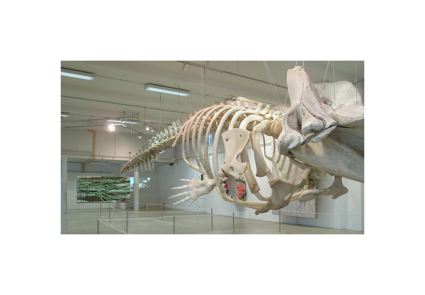 Natuurmuseum 7