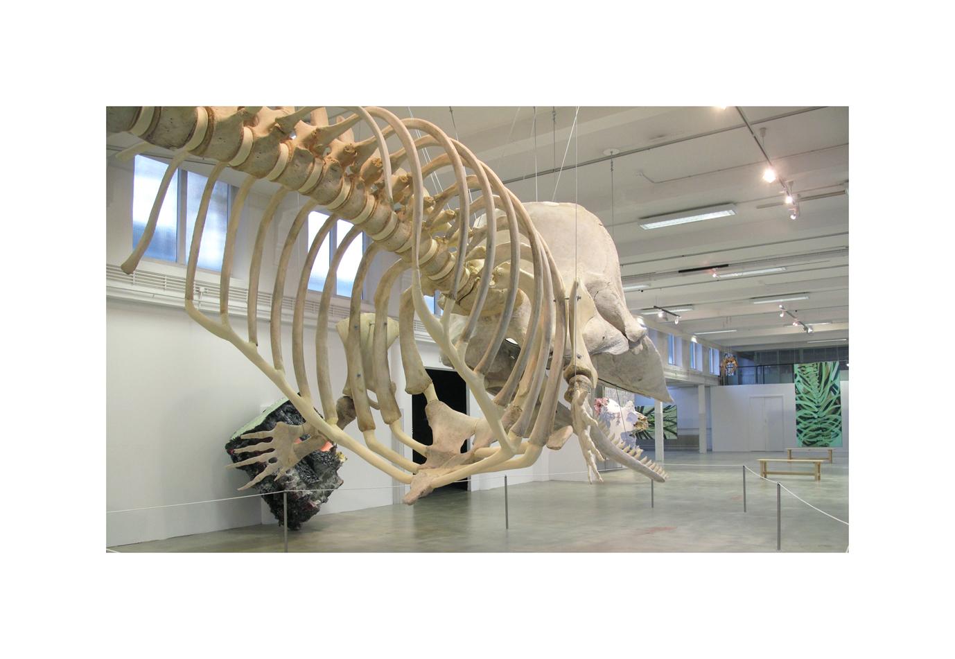 Natuurmuseum 8