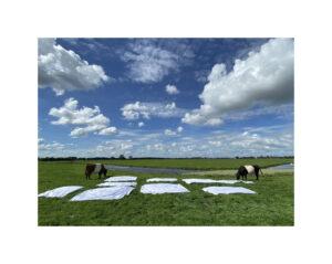 2 koeien, lakens en wolken (en 1 zwaan)©Huub van der Loo